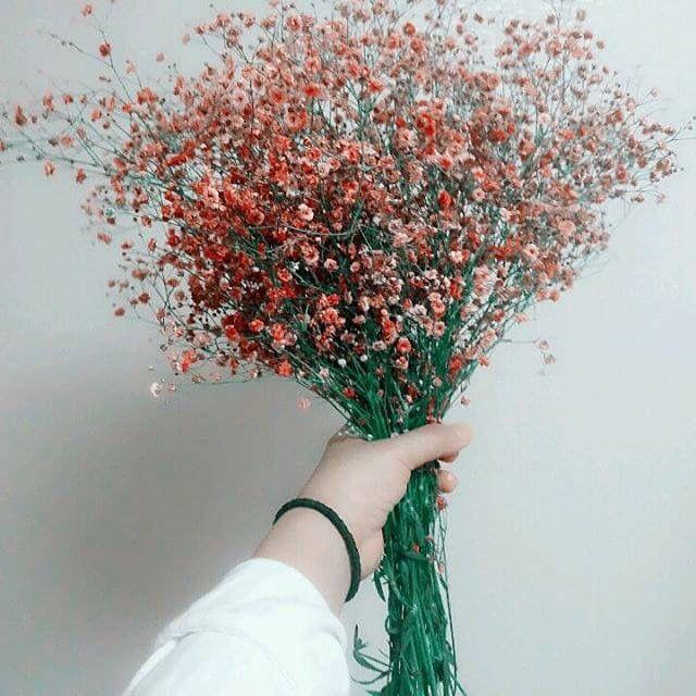 hình ảnh hoa sinh nhật